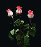 Bouquet of three rose Stock Photos