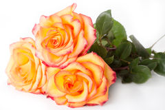 Bouquet from three roses Stock Photo