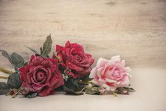 Greeting card Bouquet of three snow roses Royalty Free Stock Photography