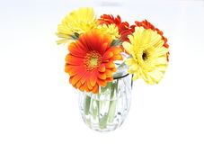 Bouquet of Transvaal daisy in a glass vase Stock Photo