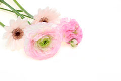 Bouquet of Transvaal daisy and Persian buttercup Royalty Free Stock Photos