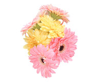Bouquet of Transvaal daisy Royalty Free Stock Photos