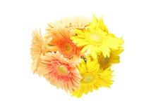 Bouquet of Transvaal daisy Stock Photos