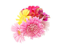 Bouquet of Transvaal daisy and zinnia Royalty Free Stock Photo