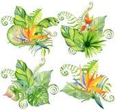 Bouquet tropical de feuilles d'aquarelle Photos libres de droits