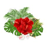 Bouquet with tropical flowers  floral arrangement, with beautiful red hibiscus and white orchid palm,philodendron  vintage vector Stock Photography