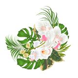 Bouquet with tropical flowers floral arrangement, with beautiful white orchid, palm,philodendron and ficus vintage vector illustra. Tion editable hand draw Royalty Free Stock Photos