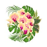 Bouquet with tropical flowers floral arrangement, with beautiful yellow orchid, palm,philodendron and ficus vintage vector illust. Ration editable hand draw Stock Photography