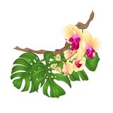 Bouquet with tropical flowers floral arrangement, with beautiful yellow orchid phalenopsis palm,philodendron vintage vector ill. Ustration editable hand draw vector illustration