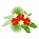 A bouquet of tropical flowers and leaves isolated on a white background. Flowers of hibiscus and plumeria, palm leaf, monstera. Stock Images