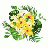Bouquet of tropical flowers. Royalty Free Stock Photos