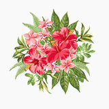 Bouquet of tropical flowers. Royalty Free Stock Photo