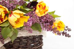 Bouquet of tuips an lilacs. Isolated Royalty Free Stock Images
