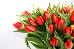 Bouquet of tulip Royalty Free Stock Image