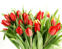 Bouquet of tulip Stock Photo