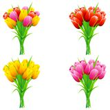 Bouquet of Tulip Stock Image