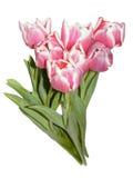 Bouquet of tulip Stock Image