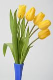 Bouquet Tulip. Bouquet yellow tulip in blue vase Royalty Free Stock Photography