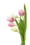 Bouquet Tulip. On white background Royalty Free Stock Photo