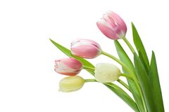 Bouquet Tulip. On white background Royalty Free Stock Photos