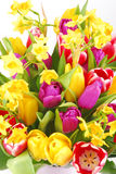 Bouquet of tulip and daffodils flowers Royalty Free Stock Photography