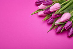 Bouquet of tulip flowers Royalty Free Stock Image