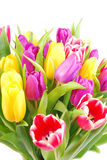 Bouquet of tulip flowers Royalty Free Stock Images