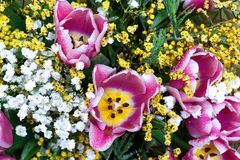 Bouquet of tulip flowers. royalty free stock photo