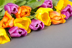 Bouquet of tulip flowers on grey Royalty Free Stock Photo