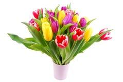 Bouquet of tulip flowers Stock Photo