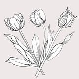 Bouquet of Tulip.Sketch Black and White. Royalty Free Stock Photo