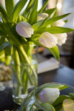 Bouquet of  tulip  in vase of glass. Royalty Free Stock Photo