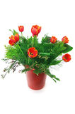 Bouquet of tulips Royalty Free Stock Images