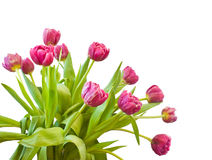 Bouquet of the tulips Royalty Free Stock Image