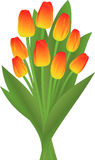 Bouquet of the tulips Royalty Free Stock Images