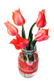 Bouquet of tulips. In a glass jar over white Stock Photos