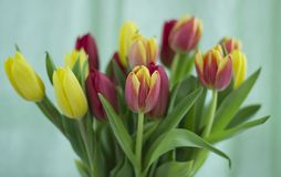 Bouquet of tulips on a light background. stock photography