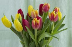 Bouquet of tulips on a light background. stock images