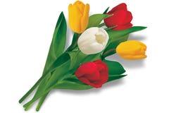 Bouquet of tulips Stock Photo