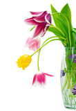 Bouquet of tulips. On a white background Royalty Free Stock Image