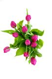 Bouquet of Tulips. A bouquet of fresh pink tulips on a white background Stock Photography