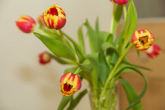 A bouquet of tulips Royalty Free Stock Photography