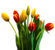 Bouquet of tulips. On isolated white background Stock Image