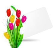 Bouquet of tulips on a background sheet Stock Image