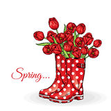 Bouquet of tulips in a beautiful polka dot rubber boots. Vector illustration. Spring flowers. Stock Photos
