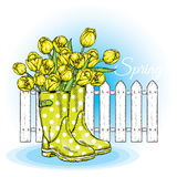 Bouquet of tulips in a beautiful polka dot rubber boots. Vector illustration. Spring flowers. Royalty Free Stock Photography