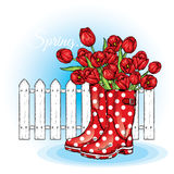 Bouquet of tulips in a beautiful polka dot rubber boots. Vector illustration. Spring flowers. Royalty Free Stock Image