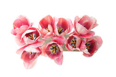 Bouquet of tulips Stock Images