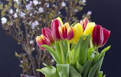 Bouquet with tulips royalty free stock photos