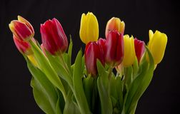 Bouquet with tulips royalty free stock images